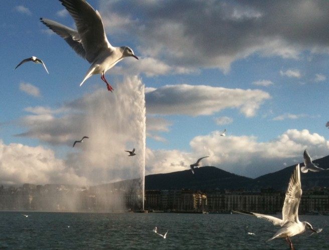 "Seagulls on Lake Geneva, the ""jet d'eau"" and the Salève Mountain"